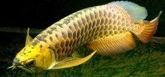金龙鱼水霉病治疗?