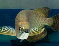 银龙鱼贵不贵