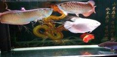 今年银龙鱼价格多少钱一