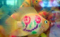 梅花鹦鹉鱼怎么养多少钱