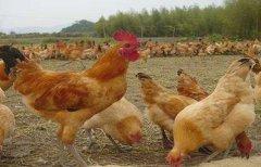 民间配资盘:2020最赚钱的养殖项目 养殖业什么最