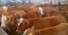 配资牌照查询谈2020年养殖业什么挣钱(养什么可以