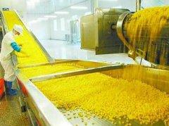 [农村小工厂暴利]农村小工厂暴利玉米深加工