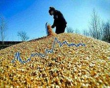 玉米深加工项目加盟加工致富小项目
