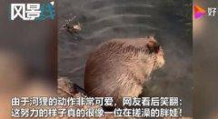 呆萌河狸在河边认真搓澡,这样就能做到防水了